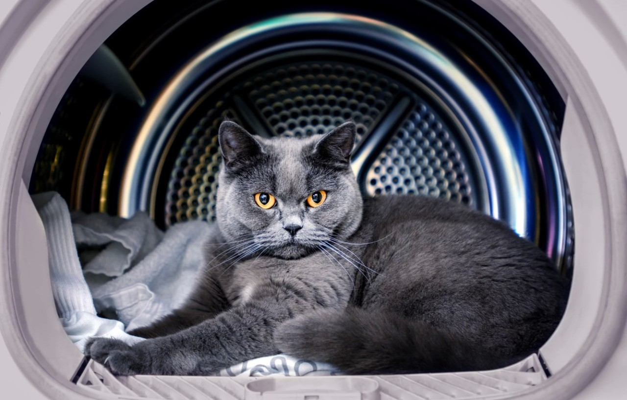Вертикальная или горизонтальная стиральная машина – какая подойдет вам
